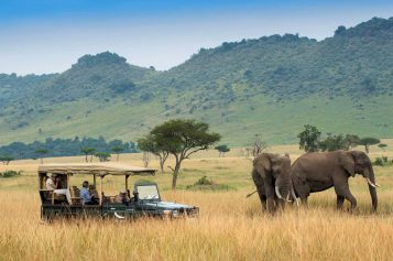 Why your next trip should on to a wild life Penwell safari?
